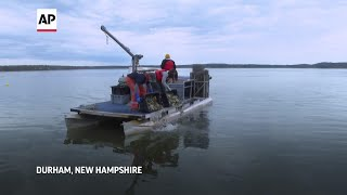 EUROPESE OMROEP | OPENN  | Conservation rescues pandemic-hit oyster farmers