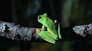 EUROPESE OMROEP OPENN Best Of Frogs | Top 5 | BBC Earth