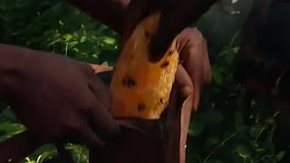 EUROPESE OMROEP | BBC Studios | Collecting Honey With The Akie - Tribe With Bruce Parry - BBC | 1498726800 2017-06-29T09:00:00+00:00