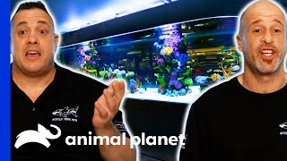 EUROPESE OMROEP | OPENN  | Brett And Wayde Build The Biggest Shark Tank Of Their Careers | Tanked