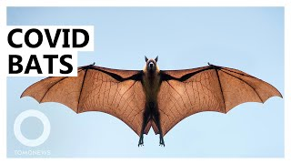 EUROPESE OMROEP OPENN Covid Likely Jumped from Bats at