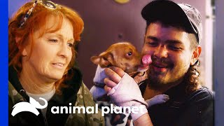 EUROPESE OMROEP | OPENN  | Chihuahua Reunited With Owner After Mugging | Pit Bulls & Parolees