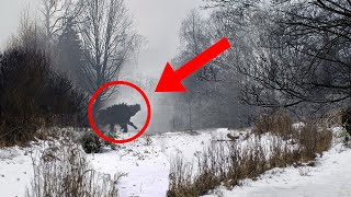 EUROPESE OMROEP | OPENN  | 10 Most Horrible Things Scientists Discovered In The Chernobyl Forest!