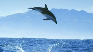 EUROPESE OMROEP | OPENN  | Incredible Dolphin Moments | BBC Earth