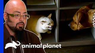 EUROPESE OMROEP | OPENN  | Cats And Dog Fight Over 20 Times A Day! | My Cat From Hell