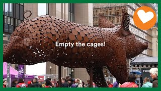 EUROPESE OMROEP | OPENN  | Empty the cages! Party for the Animals urges EU to ban cruel and outdated cages in animal farming.