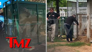 EUROPESE OMROEP | OPENN  | Jeff Lowe Says Feds Seizing Animals at His Zoo, Video of Big Cat Being Hauled Away | TMZ