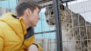 EUROPESE OMROEP | OPENN  | Snow Leopards: Ghosts in the Snow (Full Episode) | Part 2 | BBC Earth