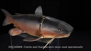 EUROPESE OMROEP | OPENN  | The Debrief: Behind the Artifact - Charlie the Fish