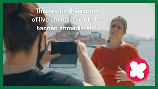 EUROPESE OMROEP OPENN #StopLiveTransport! Party for the Anim