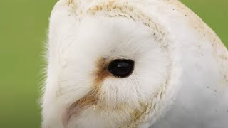 EUROPESE OMROEP | OPENN  | Saving an Iconic Bird of Prey | Wild Rescue | BBC Earth