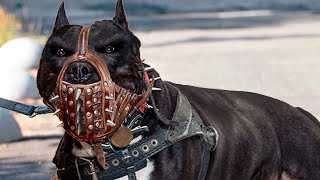 EUROPESE OMROEP | OPENN  | These Are The Most ILLEGAL Dog Breeds In The World!
