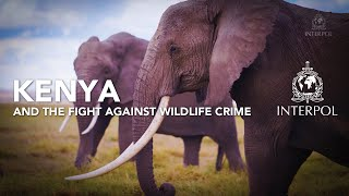 EUROPESE OMROEP | OPENN  | Kenya and the fight against wildlife crime