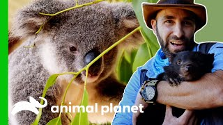 EUROPESE OMROEP | OPENN  | Learn More About Australia's Marsupials | Animal Planet
