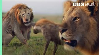 EUROPESE OMROEP | OPENN  | ONE HOUR of Amazing Animal Moments | BBC Earth