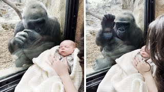 EUROPESE OMROEP | OPENN  | New Mom and Gorilla Bond Over Woman's Baby