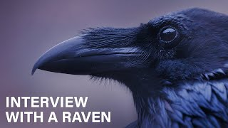 EUROPESE OMROEP | OPENN  | Interview with a Raven | The Tower of London