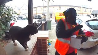 EUROPESE OMROEP OPENN Friendly Cat Scares Away Delivery Man