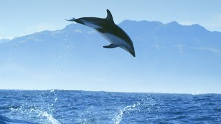 EUROPESE OMROEP OPENN Diving With Dolphins - Joy | Mind