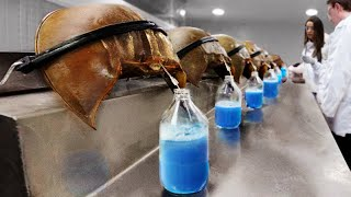 EUROPESE OMROEP OPENN 8 Most Expensive Animal Liquids I