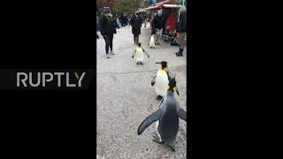 EUROPESE OMROEP OPENN USA: March of the Penguins - King