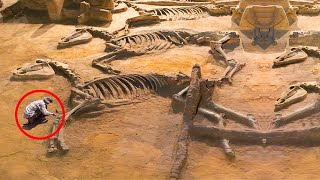 EUROPESE OMROEP OPENN 10 Most Amazing Discoveries That Shock