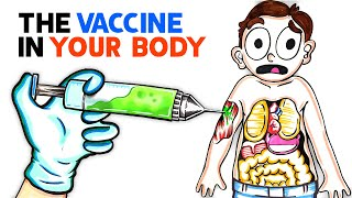 EUROPESE OMROEP | OPENN  | What The COVID Vaccine Does To Your Body