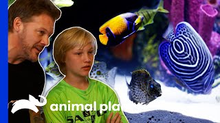 EUROPESE OMROEP | OPENN  | Exotic Fish Amaze WWE Superstar Chris Jericho's Son! | Tanked